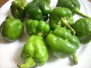 fresh capsicum