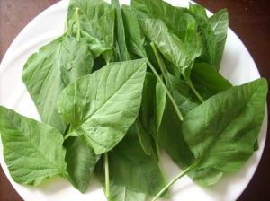 Fresh Thotakura from my garden