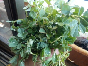 A Leafy Bouquet! ;)