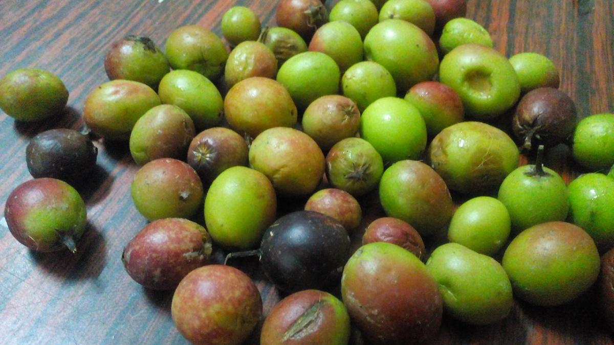 Andhra tiffins in bangalore dating 1